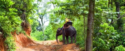 Chiang Mai Elephant Tours by Tucan Travel